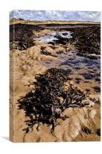Rock Pool, Canvas Print