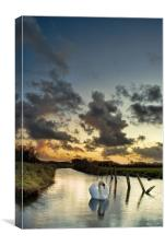 Early morning Swan, Canvas Print