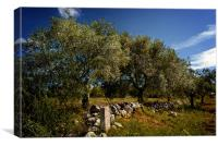 Olive Grove, Canvas Print