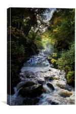 Hoar Oak Water, Canvas Print