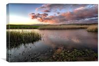 Duck Ponds, Canvas Print