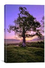 Oak Tree sunrise, Canvas Print