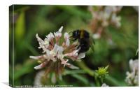 Buzz-Bee, Canvas Print