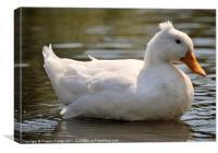 A Happy Goose