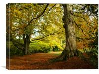 Chatsworth autumn, Canvas Print