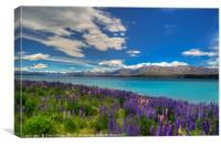 Lupins and blue water, Canvas Print