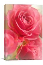 Valentine Roses, Canvas Print