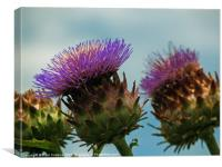 Califonian Thistle, Canvas Print