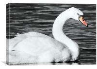 The Swan, Canvas Print