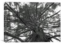 Beautiful Tree, Canvas Print