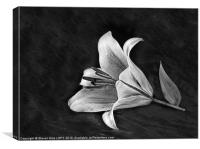 Monochrome Lily, Canvas Print