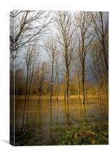 Flooded wood, Canvas Print