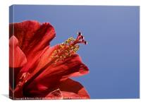 Red Tropical Hibiscus, Canvas Print