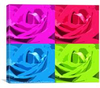 Colour of the Rose