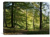 Beech Forest, Canvas Print