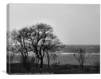 Coastal Trees in Monochrome, Canvas Print
