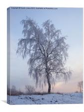 Snowy Birch, Canvas Print