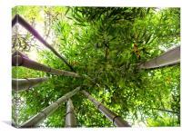 Bamboo, Canvas Print