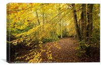 Autumn Woodland Scene II, Canvas Print