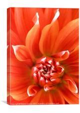 Orange Dahlia Flower Canvas, Canvas Print