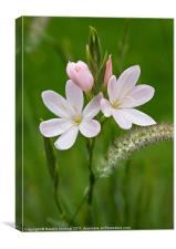 Delicate Pink Flower - Pink Princess, Canvas Print