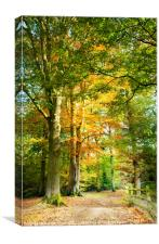 Digital Art Autumnal Woodland Pathway, Canvas Print