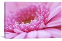 Pink Gerbera Flower, Canvas Print