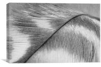 Black and White Feather, Canvas Print