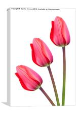 Three Red Tulips, Canvas Print