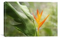 Tropical Flower, Canvas Print