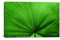 The Big Green Leaf, Canvas Print