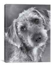 Cute Pup in Black and White, Canvas Print