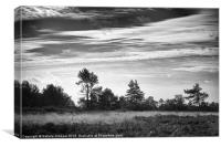 Ashdown Forest in Black and White, Canvas Print