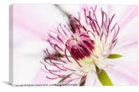 Pink Clematis Close Up - Dreamy, Canvas Print