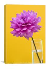 Pink Dahlia in a Vase with Yellow Orange Backgroun, Canvas Print