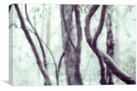 Woodland Photographic Artwork, Canvas Print