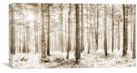 Sunlit Hazy Trees in Neutral Colours, Canvas Print