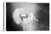 Just Dandy in Black and White, Canvas Print
