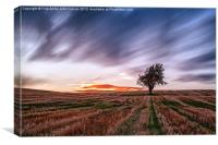 Lonely tree Landscape, Canvas Print