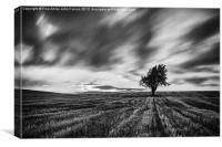 Lonely tree Landscape Black and white, Canvas Print