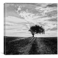 Tree in a field, Canvas Print