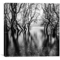 submerging trees part 2, Canvas Print