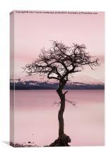 Millarochy Bay Tree Loch Lomond, Canvas Print
