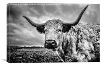 Cadzow White Cow, Canvas Print