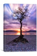 Canvas print Loch Lomond Milarrochy Bay Tree, Canvas Print
