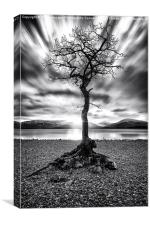 Milarrochy Bay Tree Loch Lomond, Canvas Print
