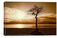 Milarrochy Bay Tree Loch Lomond, Canvas Print
