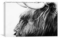 The Highland Cow, Canvas Print