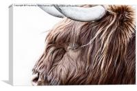 The Highland Cow, Canvas Print