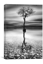 Lone Tree Milarrochy Bay, Canvas Print